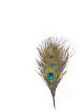 Colorful peacock feathers. On white background royalty free stock images