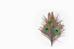 Colorful peacock feathers stock images