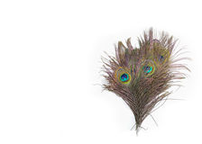 Colorful peacock feathers. On white background stock photos