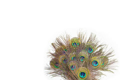 Colorful peacock feathers. On white background stock photo