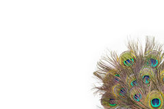 Colorful peacock feathers. On white background stock photography