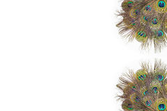 Colorful peacock feathers. On white background royalty free stock photos