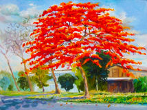 Colorful of peacock flower tree and wooden house with cloud. Painting oil color landscape original colorful of peacock flower tree and wooden house  with cloud Royalty Free Stock Photo