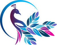 Colorful peacock logo Royalty Free Stock Images