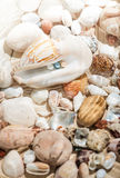 Colorful pearls lying in big seashell Royalty Free Stock Photo