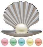 Colorful pearls and a shell Stock Images