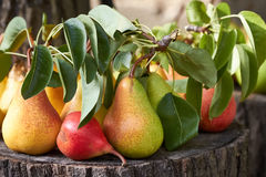Colorful pears Stock Images