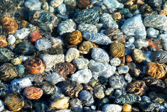 Free Colorful Pebbles Stock Photo - 639960