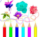 Colorful pencil draw flowers Stock Images