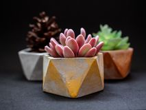 Colorful pentagon geometric planters. Painted concrete planters for home decoration royalty free stock photo