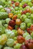 Colorful pepper background Stock Photography