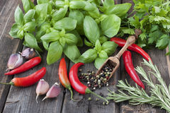 Colorful pepper with basil Royalty Free Stock Photography