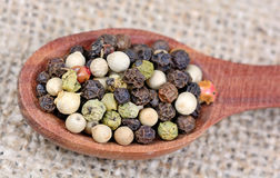 Colorful peppercorns in a wooden spoon Stock Photography