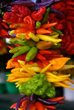 Colorful Peppers on Display Royalty Free Stock Images
