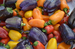 Colorful peppers for sale Royalty Free Stock Photo