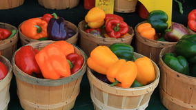 Colorful Peppers 1 stock footage