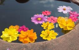 Colorful petal daisy and chrysanthemum Royalty Free Stock Photos