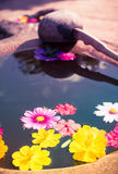 Colorful petal daisy and chrysanthemum Stock Images