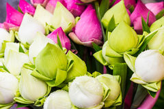 Colorful Petal folded lotus. For paying respect to Buddha in Thailand Royalty Free Stock Photography