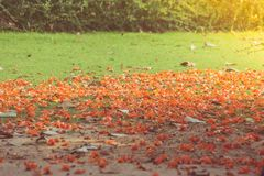 Colorful petal and tree leaves falling on the ground beside tree in winter seasonal. Selective focus Stock Photo