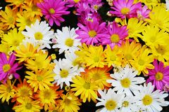 Colorful petals and flowers, natural background, garden beauty Royalty Free Stock Photo