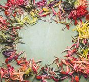 Colorful petals frame, top view. Floral layout stock images