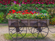 Colorful of petunia flowers on trolley or cart wooden in garden Stock Photo