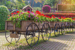 Colorful of petunia flowers on trolley or cart wooden in garden Royalty Free Stock Photography