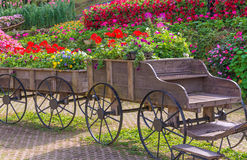 Colorful of petunia flowers on trolley or cart wooden in garden Stock Images