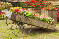 Colorful of petunia flowers on trolley or cart wooden in garden Stock Photography