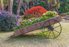 Colorful of petunia flowers on trolley wooden in garden Royalty Free Stock Images