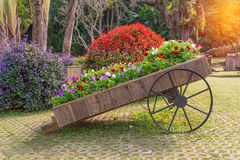 Colorful of petunia flowers on trolley wooden in garden Stock Photos