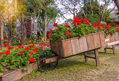 Colorful of petunia flowers on trolley wooden in garden Royalty Free Stock Photos