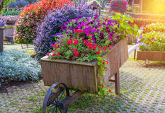 Colorful of petunia flowers on trolley wooden in garden Stock Photo