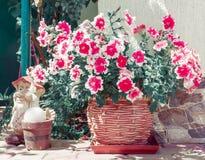 Colorful petunias Stock Photography