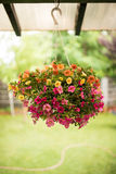 Colorful petunias in a suspended basket Royalty Free Stock Images