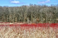 Colorful photo of Cherokee Marsh conservation area royalty free stock photo