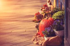 Colorful photo of halloween concept the shop front. On a sunny day Stock Image
