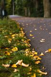 Colorful Photo of the Road in a Park, Between Woods - Closeup View of Leaves With Blurred Background with Space for Text, Sunny. Autumn day, Partly Blurred stock photo