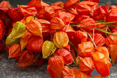 Colorful physalis Royalty Free Stock Photos