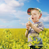 Colorful picture of young boy on the meadow Royalty Free Stock Photo