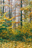 Colorful, picturesque forest in the morning mist. tinted photo. Autumn landscape. colorful, picturesque forest in the morning mist. tinted photo Royalty Free Stock Photos