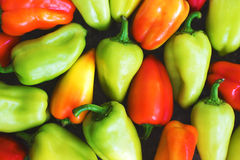Colorful pile of organic sweet peppers Stock Images