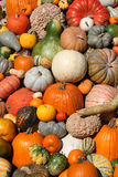 Colorful pile of pumpkins. Royalty Free Stock Photo