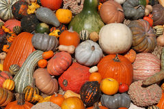 Colorful pile of pumpkins.