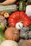 Colorful pile of pumpkins. Stock Photos