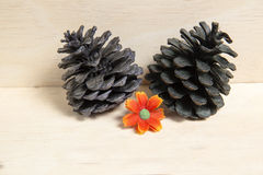 Colorful pine cones with backdrop Stock Images