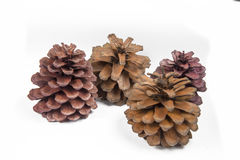Colorful pine cones with backdrop royalty free stock photography