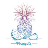 Colorful pineapple sketch. On white background. Vector illustration royalty free illustration