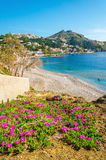 Colorful pink flowers at sandy beach, Greek Island Stock Images